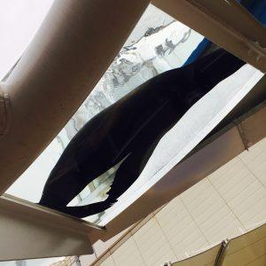池袋サンシャイン水族館 赤ちゃん連れ ランチ 授乳室 オムツ替え
