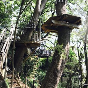 リゾナーレ熱海 森の空中基地 くすくす ツリーハウス